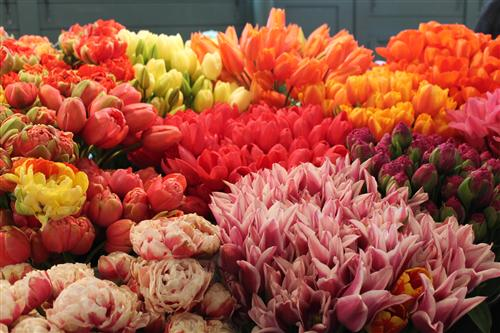 Tulips at the Pike Place Market